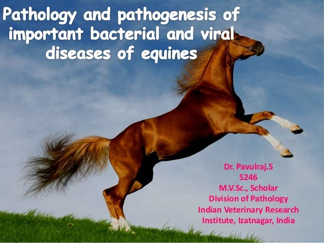 Dr. Pavulraj.S 5246 M.V.Sc., Scholar Division of Pathology Indian Veterinary Research Institute, Izatnagar, India