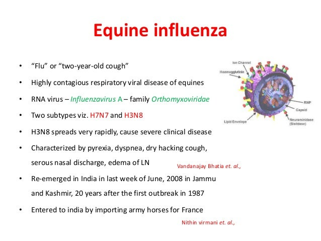Image Result For Equine Flu