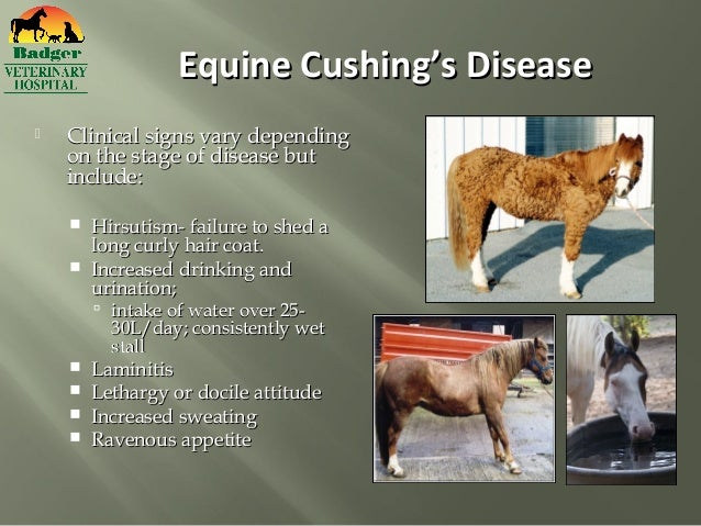 cushings in horses and weight loss