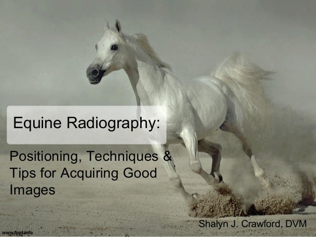 Equine Radiography Positioning Techniques Tips For Acquiring Good