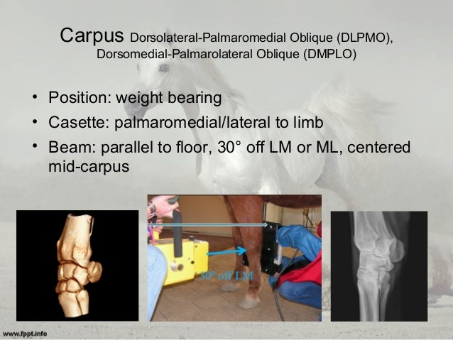 Equine Radiography Positioning Techniques Amp Tips For