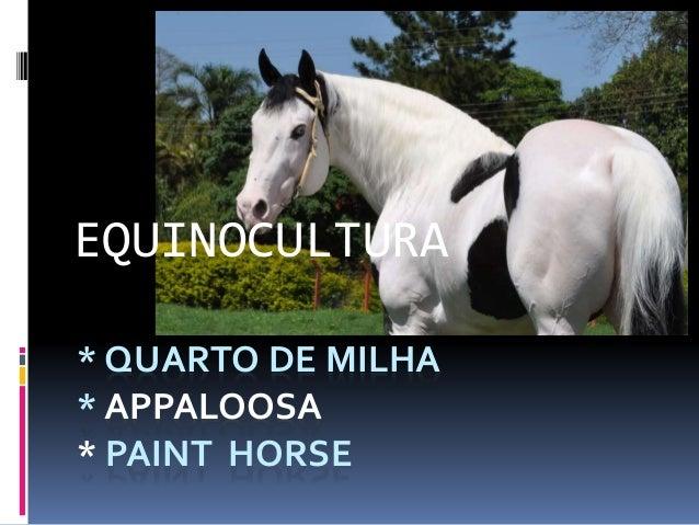 EQUINOCULTURA  * QUARTO DE MILHA  * APPALOOSA  * PAINT HORSE