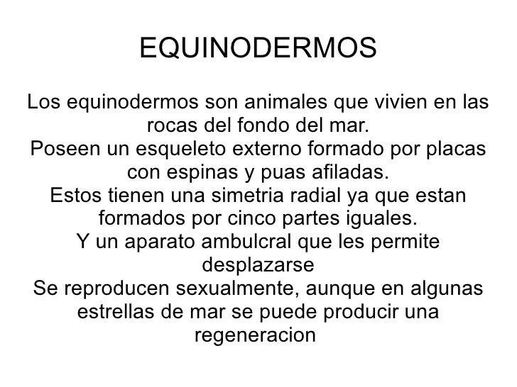 EQUINODERMOSLos equinodermos son animales que vivien en las             rocas del fondo del mar.Poseen un esqueleto extern...