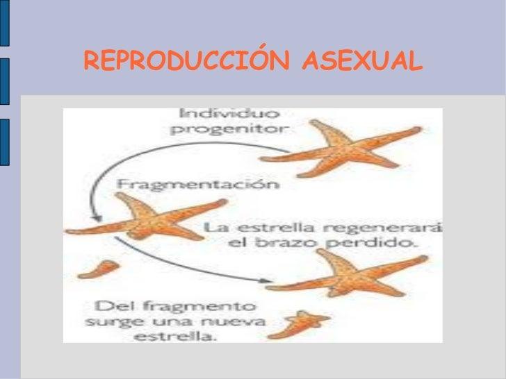 Artropodos reproduccion asexual imagenes