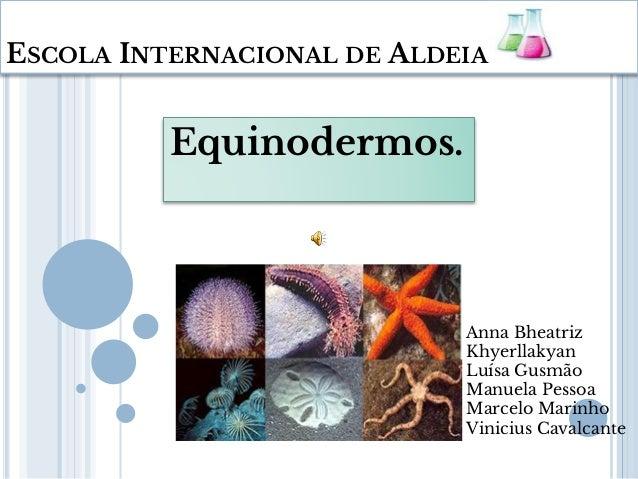 ESCOLA INTERNACIONAL DE ALDEIA Equinodermos. Anna Bheatriz Khyerllakyan Luísa Gusmão Manuela Pessoa Marcelo Marinho Vinici...