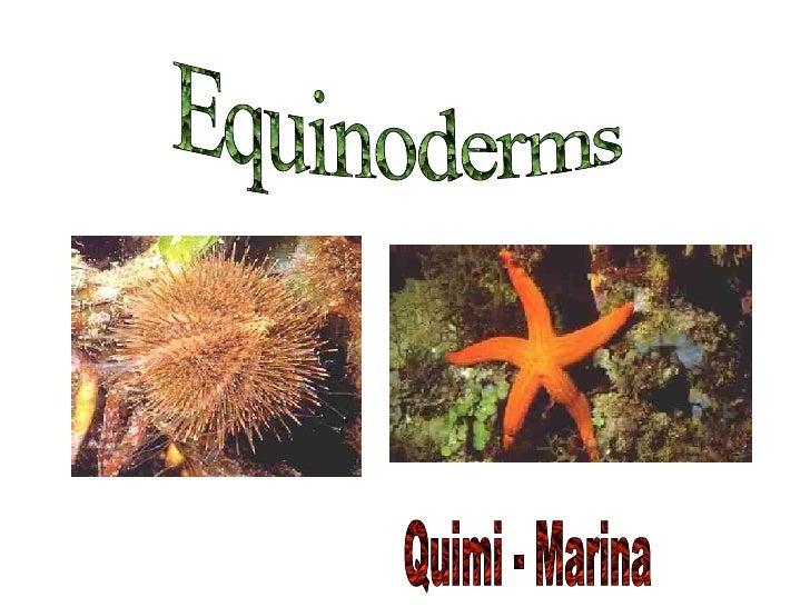 Equinoderms Quimi - Marina
