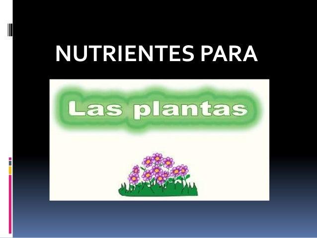  Las plantas requieren de muchos nutrientesquímicos para vivir y desarrollarse, a estoselementos se les denomina nutrient...