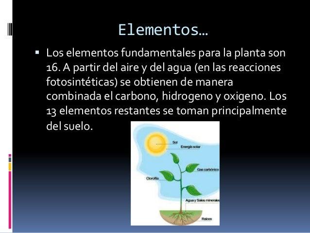 Los elementos utilizados para las plantas para sunutrición, se derivan en última instancia de losminerales de las rocas ...