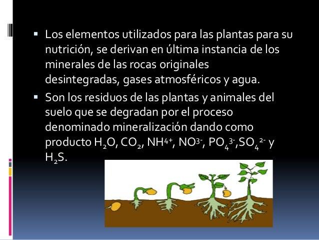 Los nutrientes… Los nutrientes se vuelven disponibles para lasplantas a través de la desintegración deminerales y la desc...