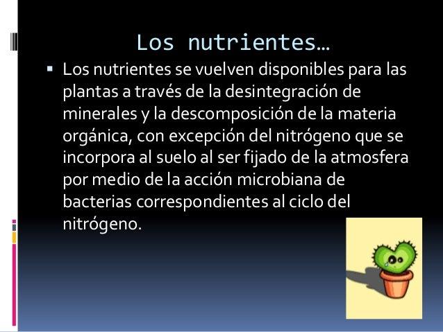 Fertilidad… La fertilidad de un suelo se refiere a ladisposición de nutrientes para las plantas. Los tres principales nu...