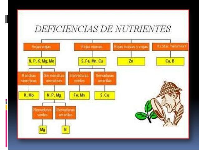 NUTRIENTE FUNCION FORMA ASIMILABLENitrógeno Forma parte de proteínas y clorofila, da color verde a las plantas y promuevee...