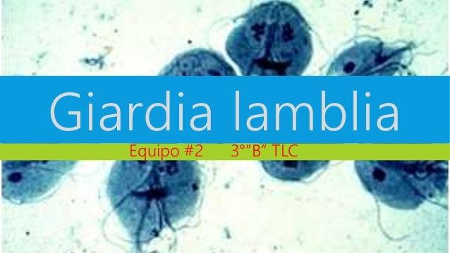 "Giardia lamblia  Equipo #2 3°""B"" TLC"
