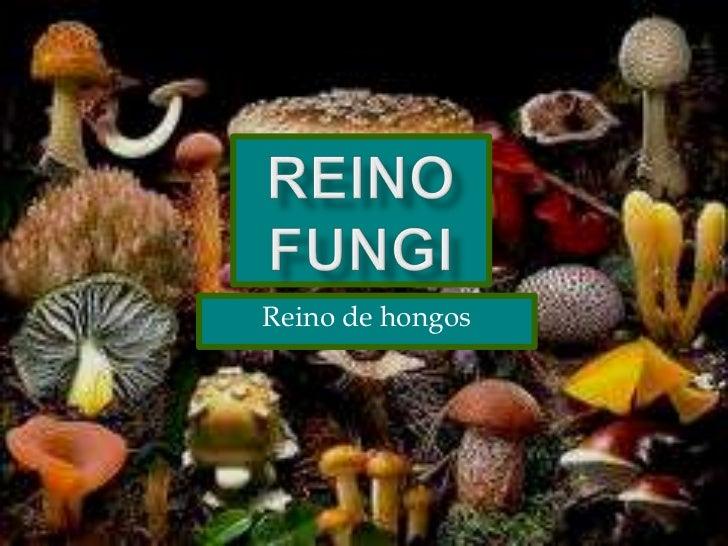 Reino fungi<br />Reino de hongos<br />
