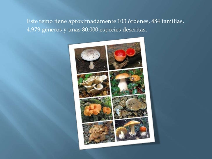 Este reino tiene aproximadamente 103 órdenes, 484 familias,<br />4.979 géneros y unas 80.000 especies descritas.<br />