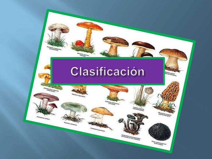 Clasificación<br />