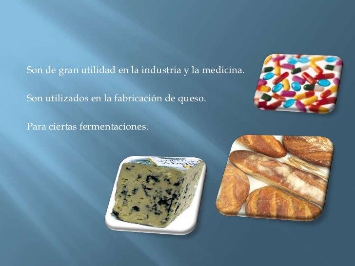 Son de gran utilidad en la industria y la medicina.<br />Son utilizados en la fabricación de queso.<br />Para ciertas ferm...