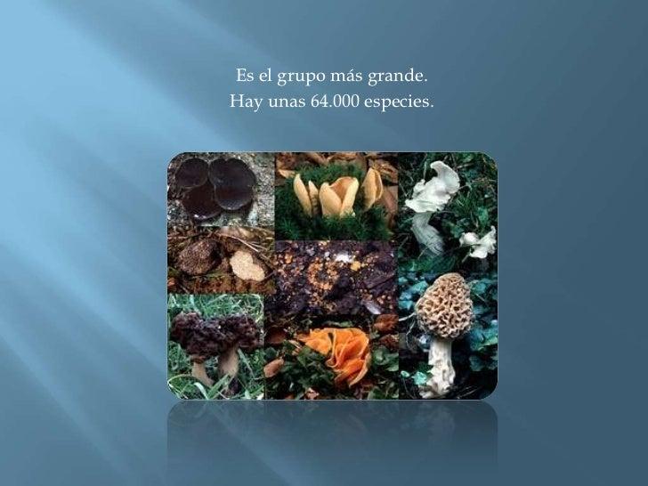 Es el grupo más grande.<br />Hay unas 64.000 especies. <br />
