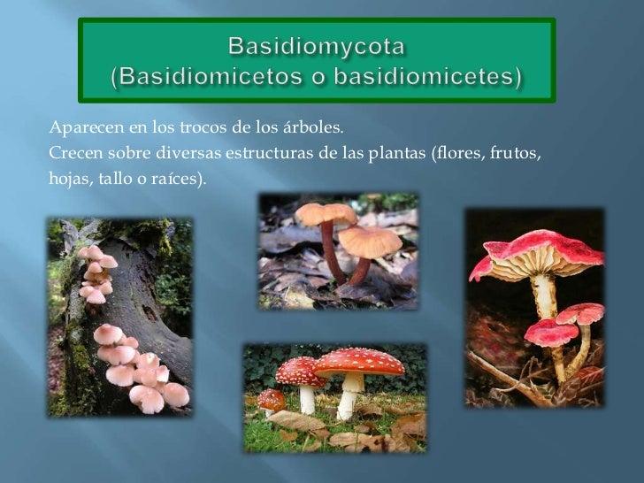 Basidiomycota(Basidiomicetos o basidiomicetes)<br />Aparecen en los trocos de los árboles.<br />Crecen sobre diversas estr...