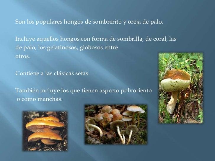 Son los populares hongos de sombrerito y oreja de palo.<br />Incluye aquellos hongos con forma de sombrilla, de coral, las...
