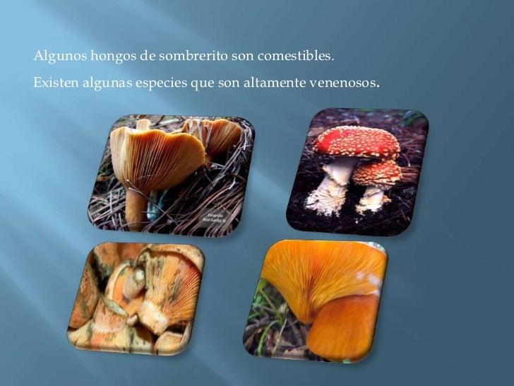 Algunos hongos de sombrerito son comestibles.<br />Existen algunas especies que son altamente venenosos.<br />