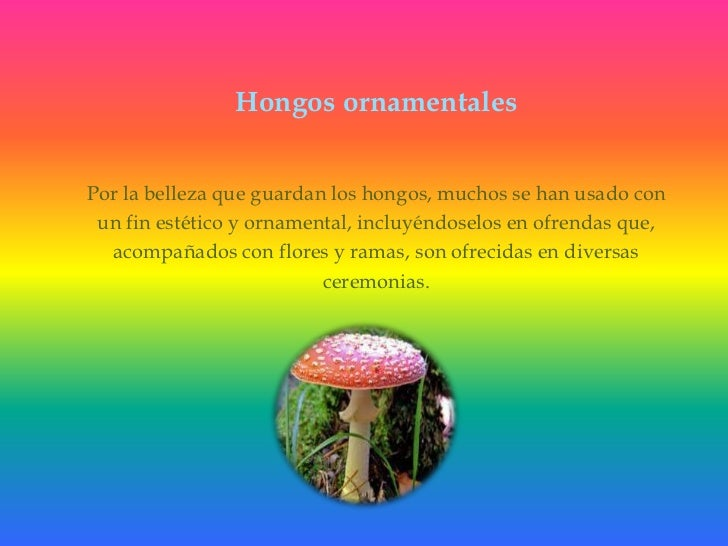 Hongos ornamentales<br />Por la belleza que guardan los hongos, muchos se han usado con<br />un fin estético y ornamental,...