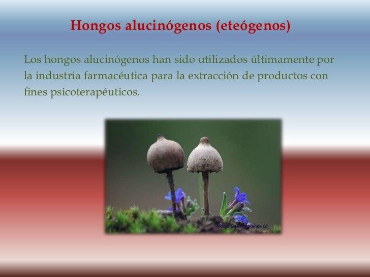 Hongos alucinógenos (eteógenos)<br />Los hongos alucinógenos han sido utilizados últimamente por<br />la industria farmacé...