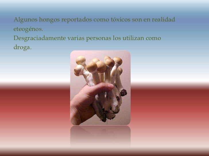 Algunos hongos reportados como tóxicos son en realidad<br />eteogénos.<br />Desgraciadamente varias personas los utilizan ...