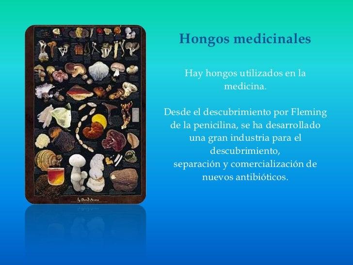 Hongos medicinales<br />Hay hongos utilizados en la<br />medicina.<br />Desde el descubrimiento por Fleming<br />de la pen...