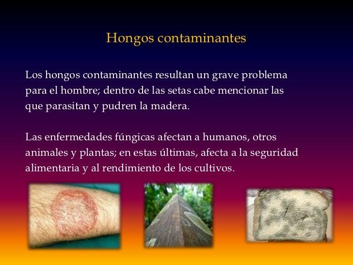Hongos contaminantes<br />Los hongos contaminantes resultan un grave problema<br />para el hombre; dentro de las setas cab...