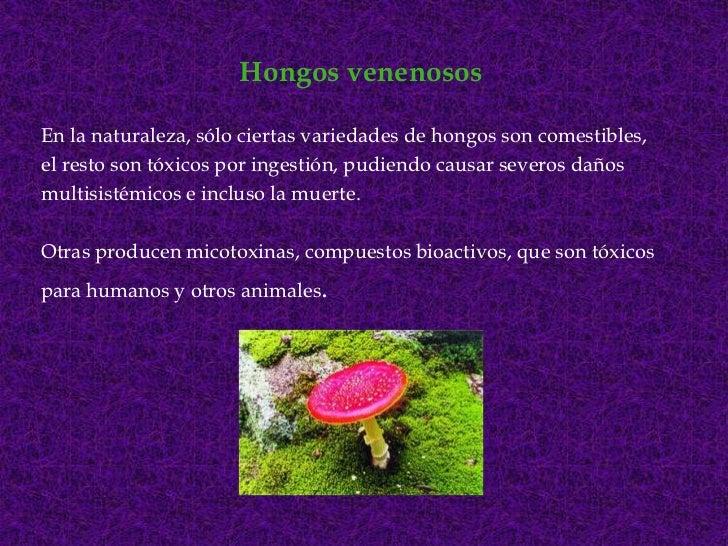 Hongos venenosos<br />En la naturaleza, sólo ciertas variedades de hongos son comestibles,<br />el resto son tóxicos por i...