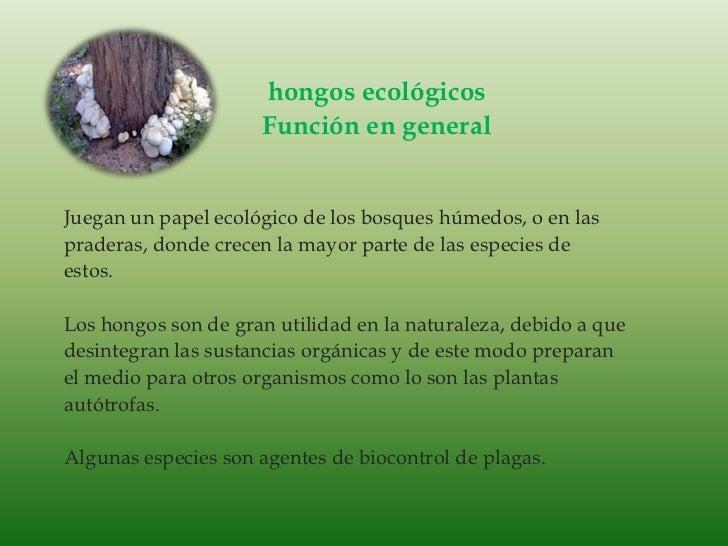 hongos ecológicos<br />Función en general<br />Juegan un papel ecológico de los bosques húmedos, o en las<br />praderas, d...