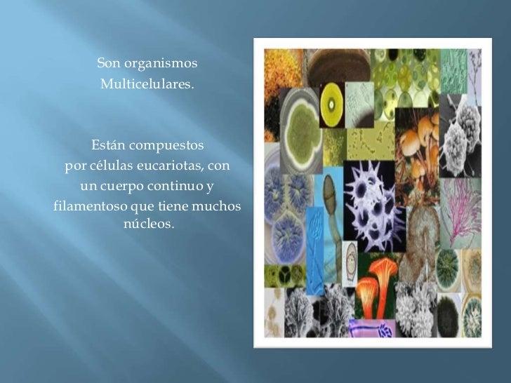 Son organismos <br />Multicelulares.<br />Están compuestos <br />por células eucariotas, con <br />un cuerpo continuo y <b...