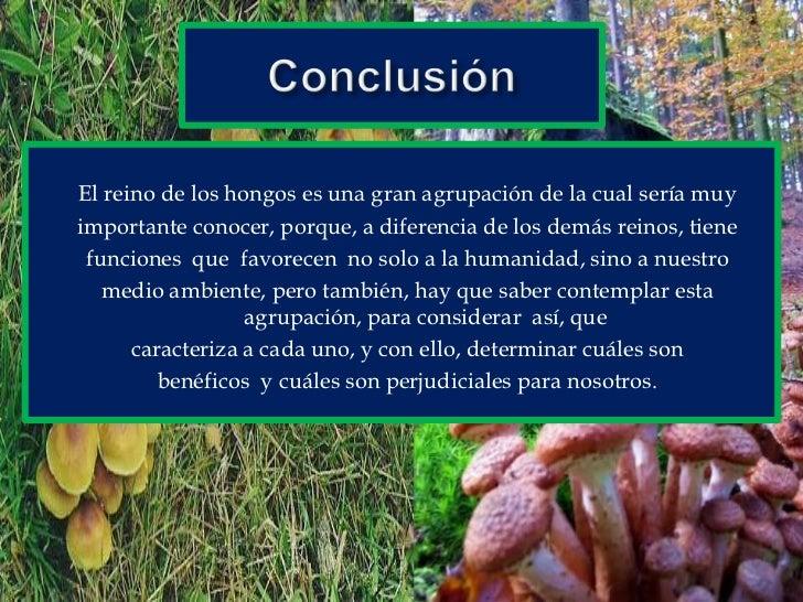 Conclusión<br />El reino de los hongos es una gran agrupación de la cual sería muy<br />importante conocer, porque, a dife...
