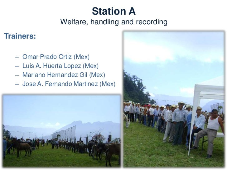 Station A  Welfare, handling and       recordingNeeds:  – Recording formats     • Age     • Body Condition  – Welfare asse...