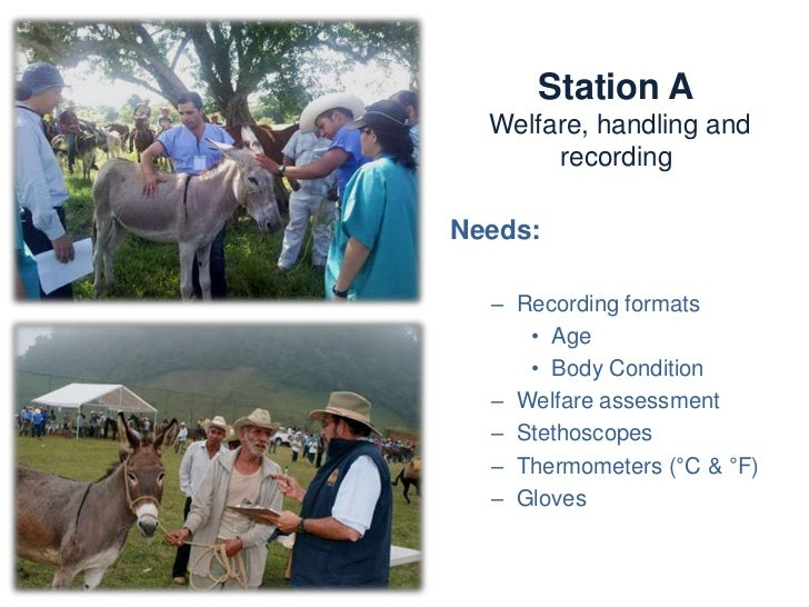 Station A                Welfare, handling and recordingActivities:   – Recording BCS, age, gender, owner, etc.   – Every ...