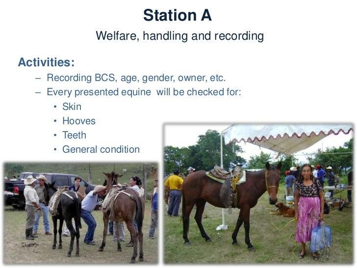 Station AWelfare, handling and recording–   Welfare assessment–   Behaviour assessment–   Handling and restraining techniq...