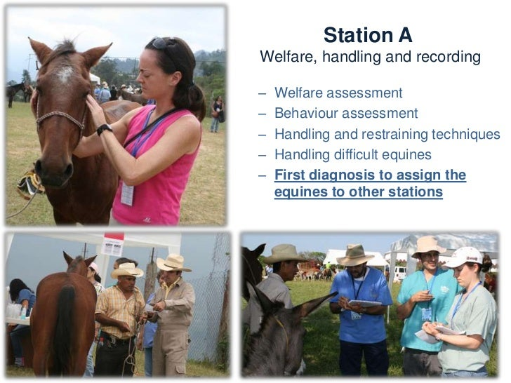 Station A  Welfare, handling and recordingKnowledge and skills:   –   Physical examination   –   Welfare assessment   –   ...