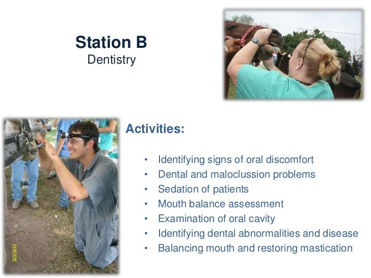 Station B                   DentistryKnowledge and skills:-   Horse head & teeth structure and functioning-   Aging-   Den...