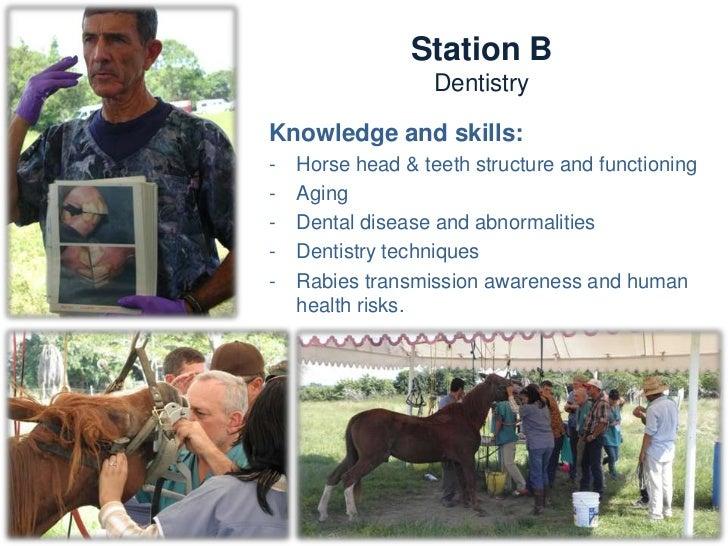 Station C                Wounds and harnessingTrainers:   -   Des Bridges (UK)   -    Sandra (Mex)            -   Kate (UK...