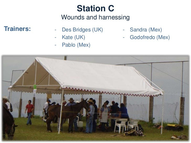 Station C       Wounds and harnessingNeeds:  –   Materials for harnesses  –   Tables and chairs  –   Tools for saddlery  –...
