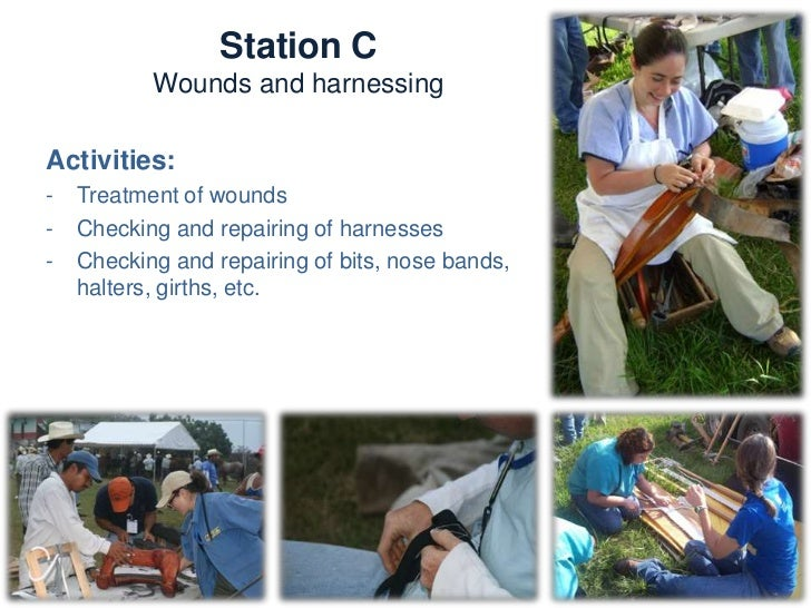 Station C            Wounds and harnessesKnowledge and skills:-   Harness fitting-   Bits, bitting and other horse-driving...