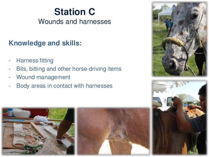 Station D                    Musculoskeletal and hoofTrainers:   -   Alejandro Rodríguez Monterde (Mex)   -   Tracy Turner...