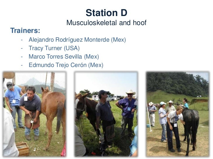 Station D         Musculoskeletal and hoofNeeds:           –   Trimming and farriery tools           –   Hoof testers     ...