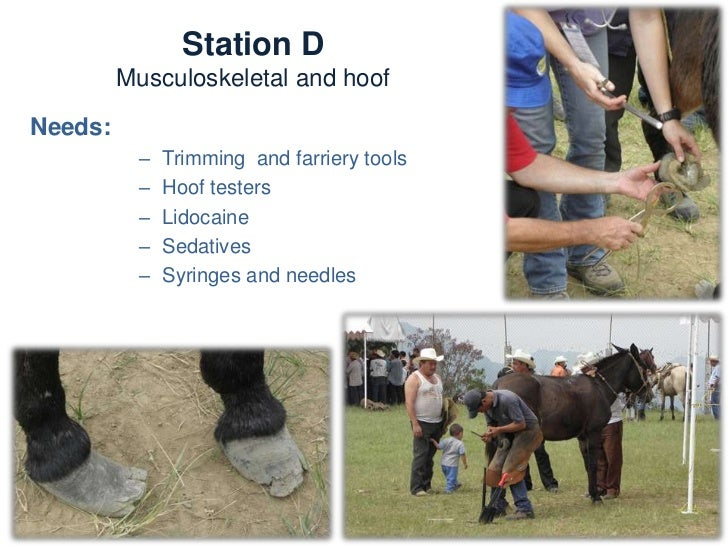 Station D   Musculoskeletal and hoofActivities:   -   Conformation assessment   -   Hoof balance and shoeing       assessm...