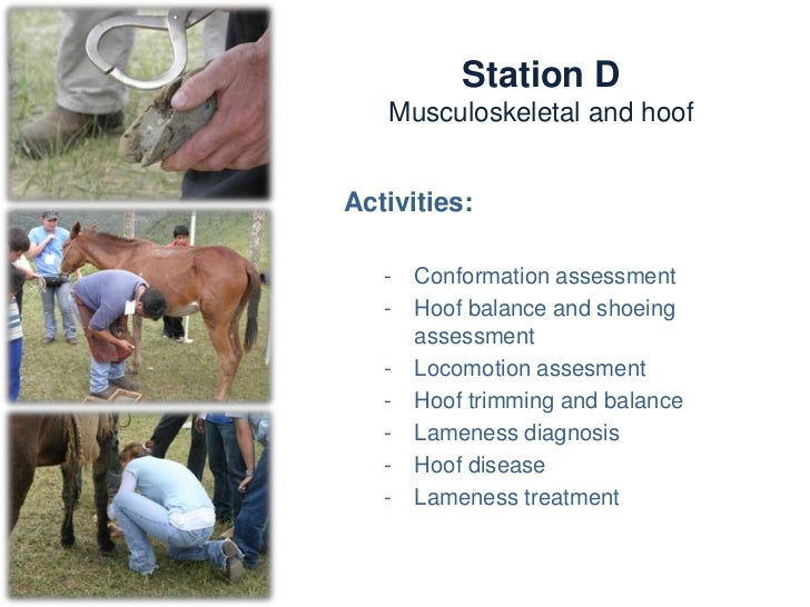 Station D                     Musculoskeletal and hoofKnowledge and skills:   -   Conformation assessment   -   Gait asses...