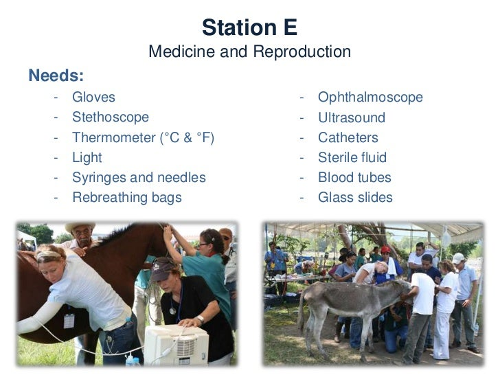 Station E       Medicine and ReproductionActivities:   -    Physical examination   -    Diagnostic techinques   -    Progn...