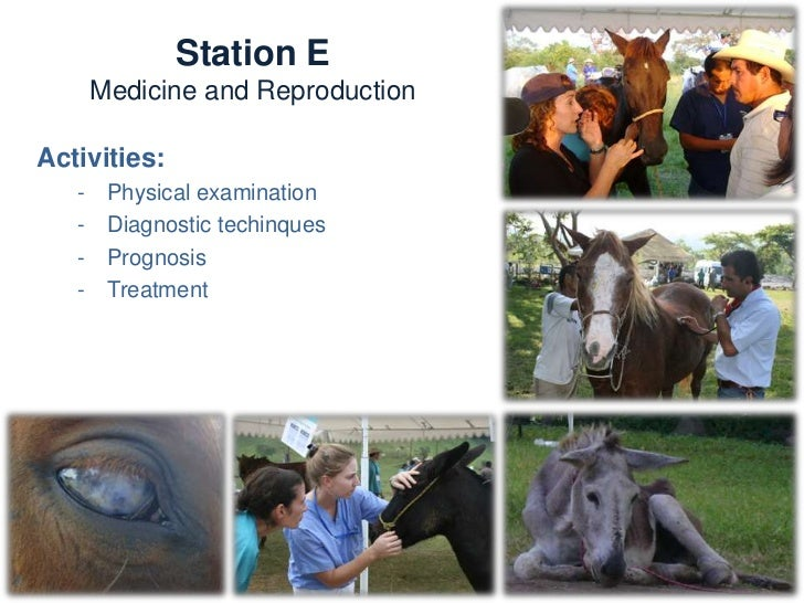 Station E        Medicine and ReproductionKnowledge and skills:   -   Dermatology   -   Digestive   -   Respiratory   -   ...