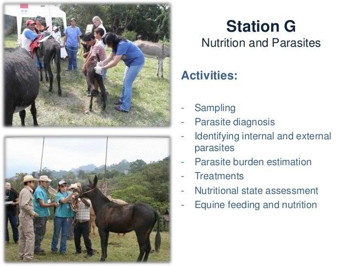 Station G       Nutrition and ParasitesKnowledge and skills:   -   Internal parasites   -   External parasites   -   Nutri...