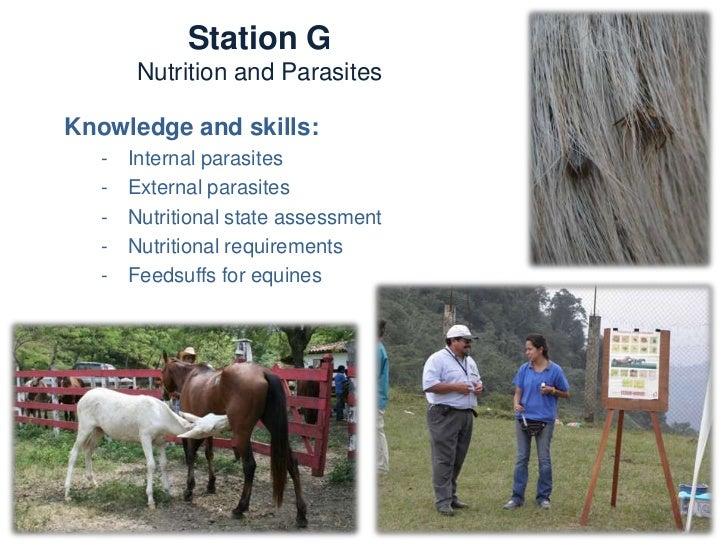 Station H  Community partnershipTrainers:   -   Stephen Blakeway (UK)   -   Kim Beddel (Costa Rica)   -   Leticia Galindo ...