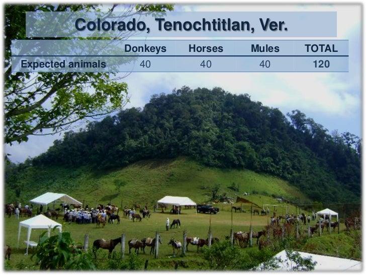 Day 2                           Tuesday 11 – 10 – 11San Juan Tepulco, Acajete, Puebla         3 h from CEIEGT